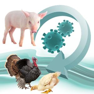 Entrevista canal 3/24: Empresas alimentarias y Coronavirus